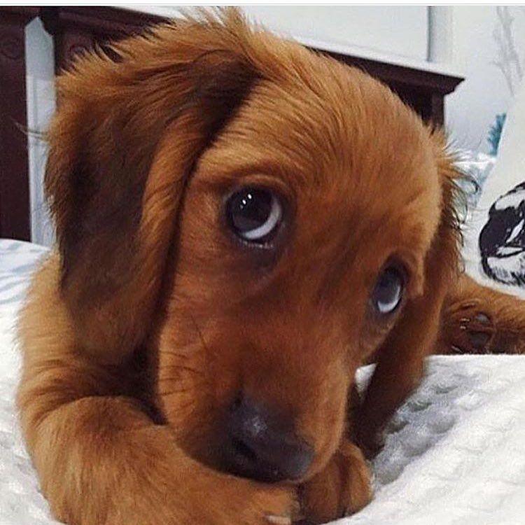 Gähnte Ihr Hund Nur Weil Sie Es Taten Dog Is Awesome