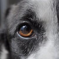Gähnte Ihr Hund nur, weil Sie es taten?