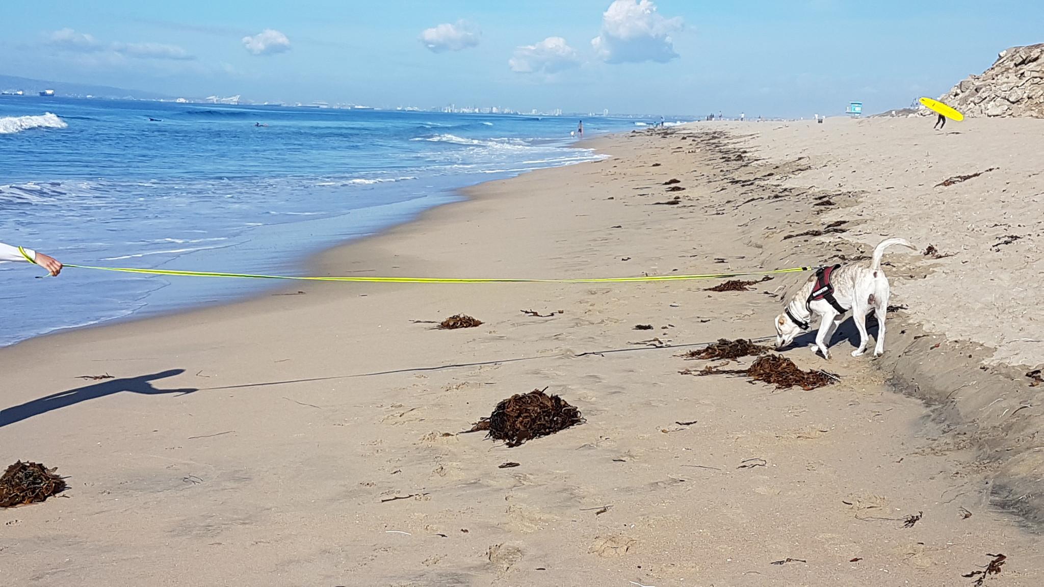 Goofy_Dog-beach_Huntington_beach