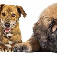 Die 45 beliebtesten Hunderassen der Welt