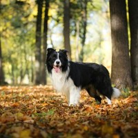 Tick-borne threats to Dogs