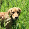 The Facts about Giardia & Pets