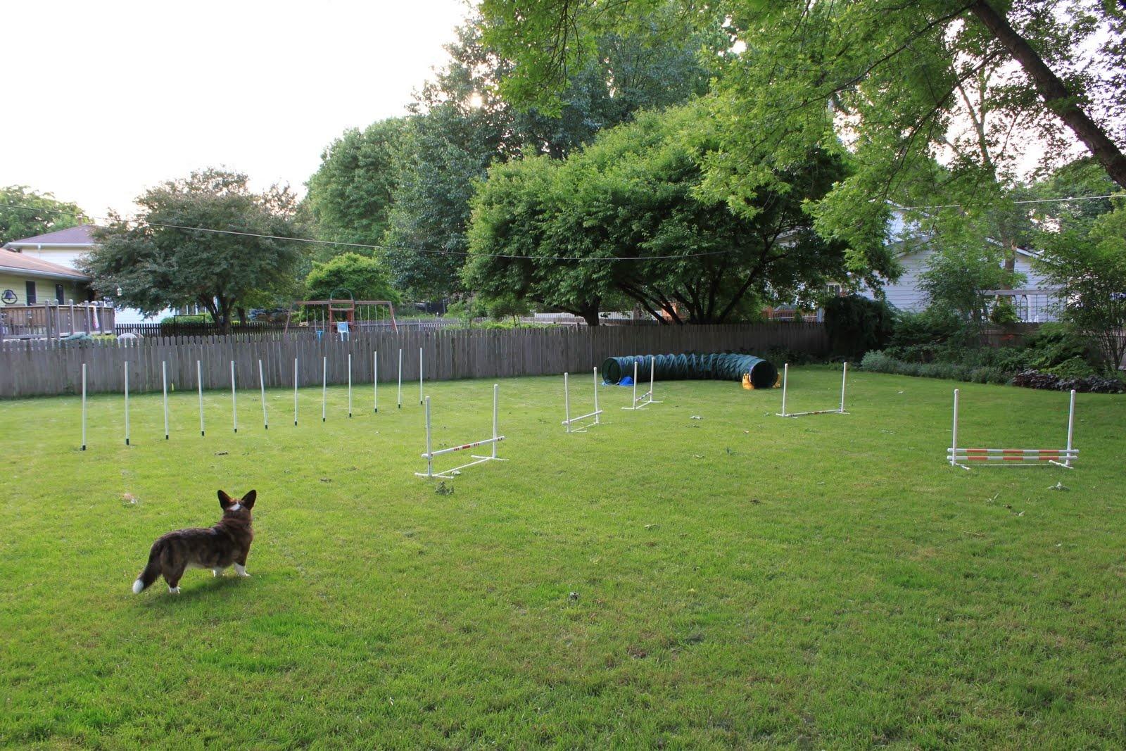 Backyard-agilitykurs