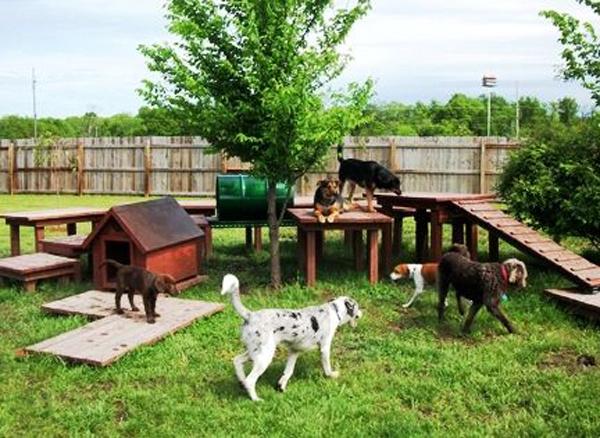 Hundespielplatz-im-Garten