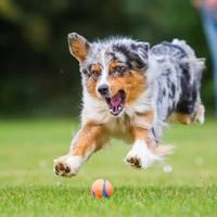 Unterhaltsame Aktivitäten, die Sie mit Ihrem Hund im Hinterhof oder Garten durchführen können