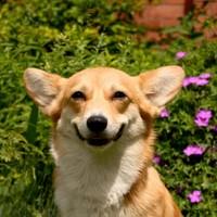 Möglichkeiten zu erkennen, ob Ihr Hund ein glücklicher Hund ist