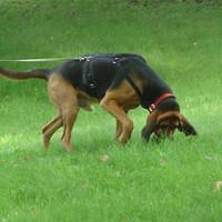 Mantrailing mit deinem Hund