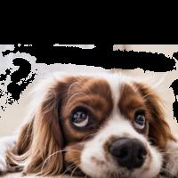 Wirklich erstaunliche Hunde-Fakten