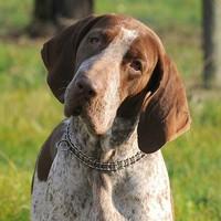 Entschlüsseln der Körpersprache vom Hund: 8 häufige Verhaltensweisen erklärt
