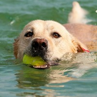 Hundeschwimmstunde