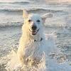 Aktivitäten für Deinen Hund, wenn er Wasser liebt
