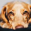 Fakten über die Augen Ihres Hundes