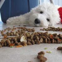 Anzeichen und Symptome von Mangelernährung bei Hunden