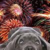 Tipps, wie Sie ihrem Hund helfen können, wenn er Angst vor Feuerwerk hat