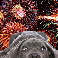 Tips for helping a Dog if he's scared of Fireworks