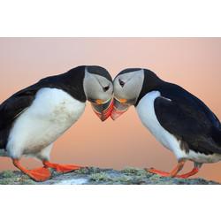 Schilderij | Verliefde vogels