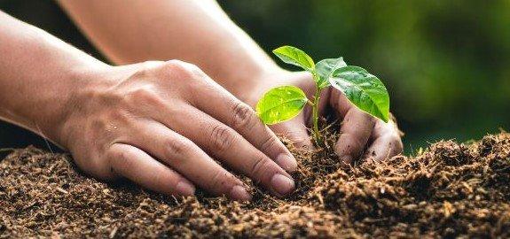 Wij planten 10 bomen voor ieder bureau dat wij verkopen