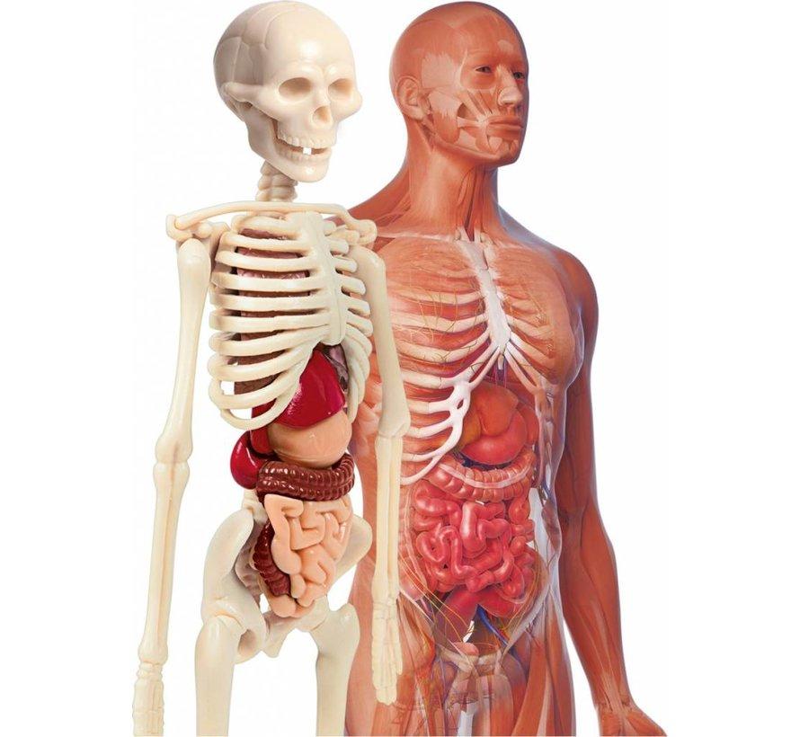 Wetenschap en Spel Anatomielab