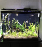 NICREW ClassicLED 46'' - 54''Aquarium Light, Fish Tank Light with Extendable Brackets, White and Blue LEDs