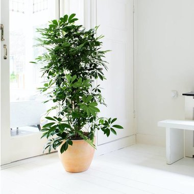 Grote planten