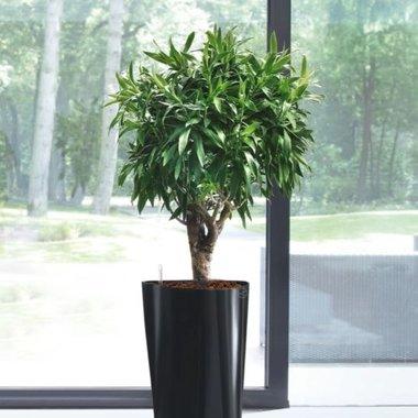 Hydrocultuurplanten