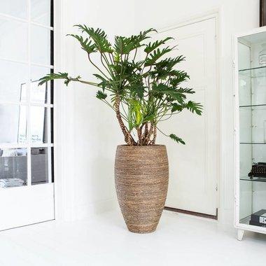Entree planten binnen