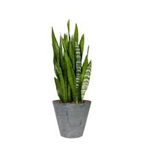 Artstone Sansevieria in Grey Artstone pot