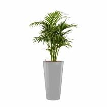 Kentiapalm in witte zelfwatergevende pot