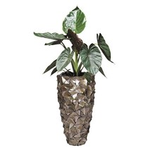 Alocasia in Schelpen Pot Exclusive
