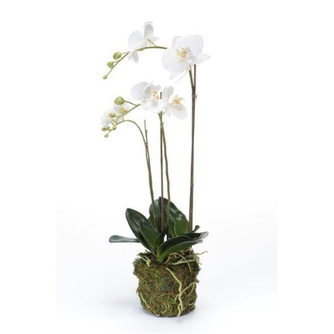 Kunstplant Orchidee in Schelpen planter! - Fleurdirect