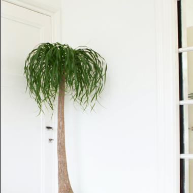 Bijzondere kamerplanten