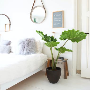 Slaapkamer plant