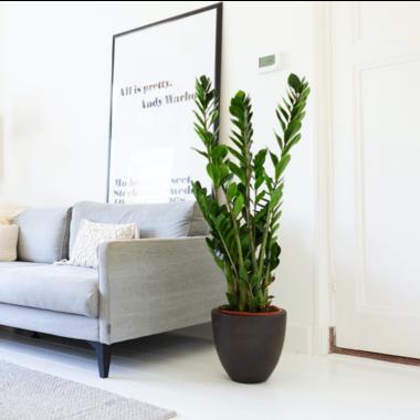Huiskamerplanten