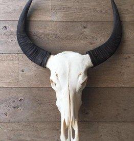 Damn Skull real buffalo