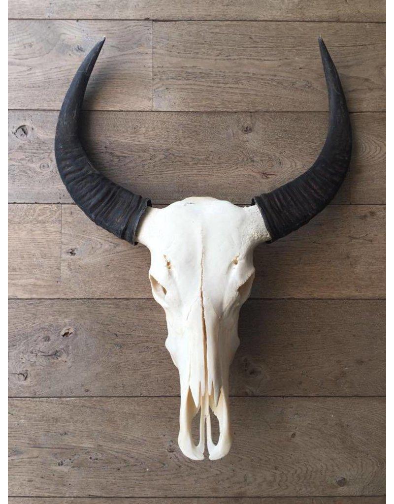 Damn Skull echt buffel