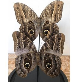 Damn Showcase with real butterflies - Copy
