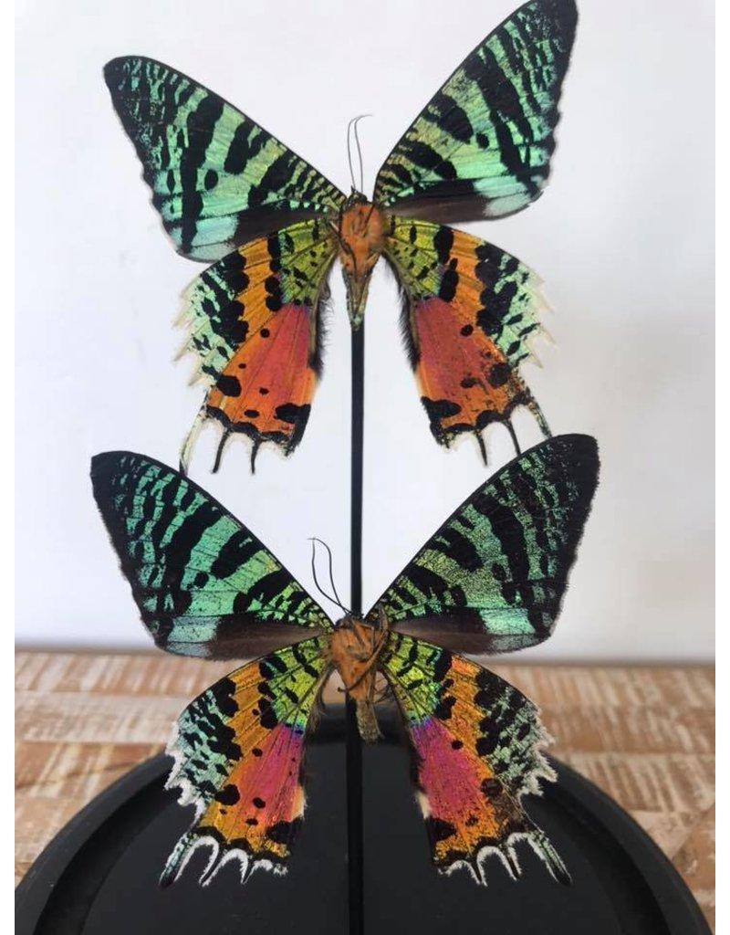 Damn Stolp met vlinders