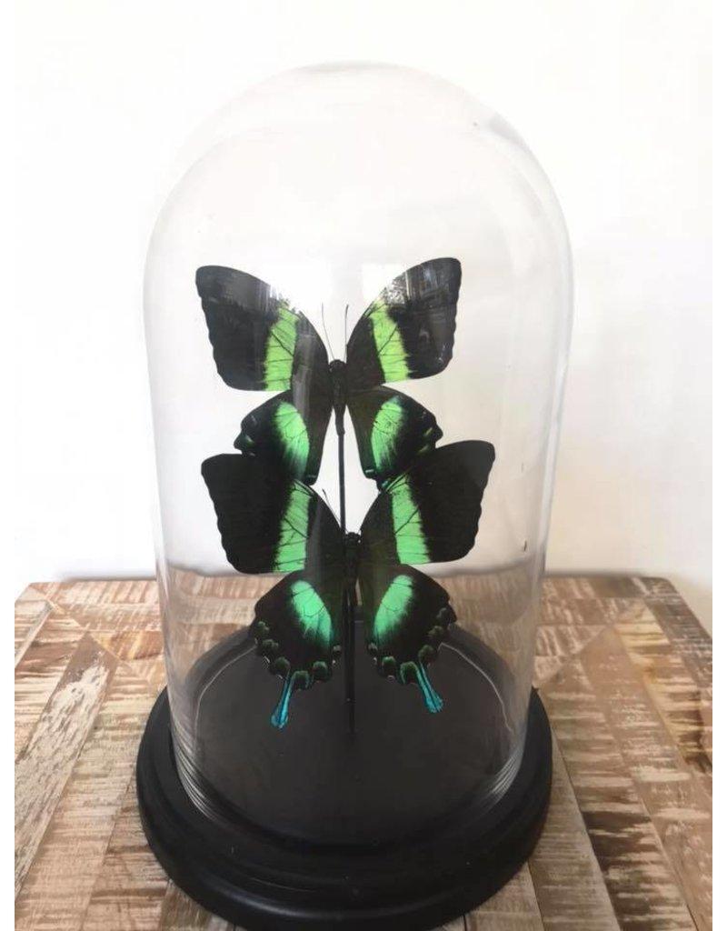 Damn Stolp met vlinders  - Copy