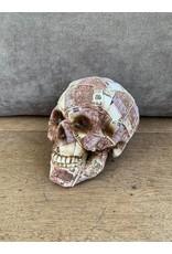 Damn Skull 40 cm white - Copy - Copy - Copy - Copy - Copy - Copy - Copy - Copy - Copy - Copy - Copy