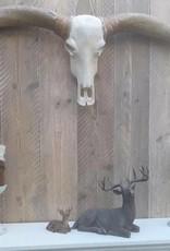 Damn Longhoorn grijze hoorns zwarte punten