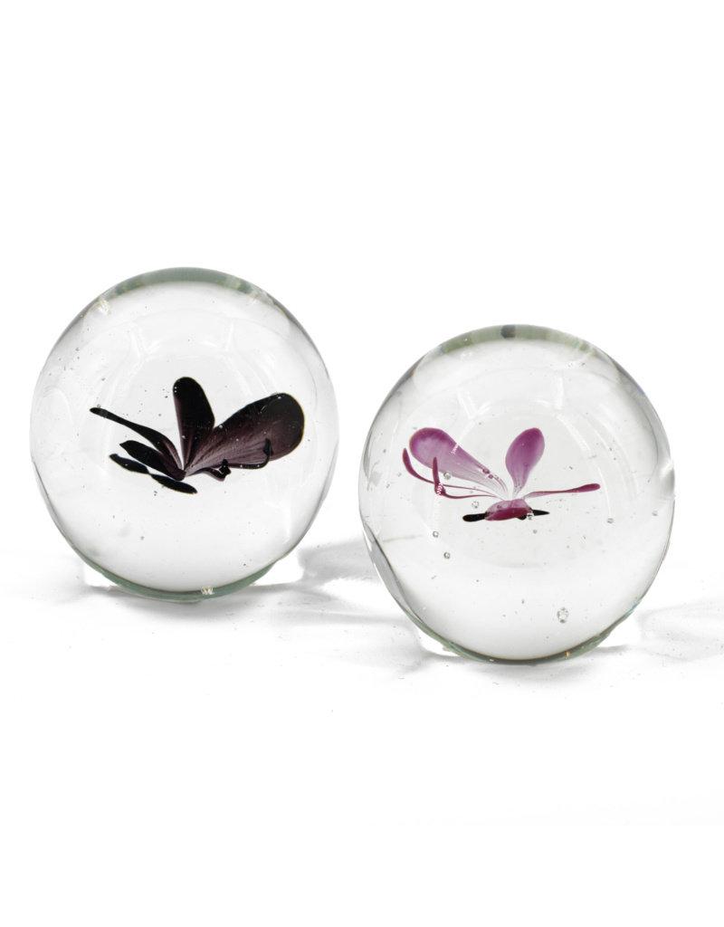 Damn Vlinder in glas