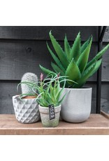 Damn Fake plant in 60 cm pot - Copy - Copy - Copy - Copy
