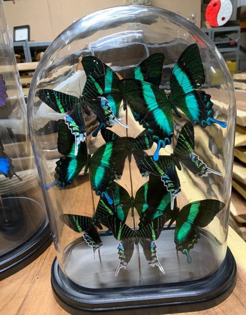 Damn Stolp with butterflies - Copy - Copy