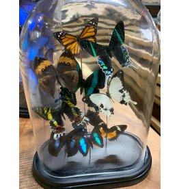 Damn Dome with real butterflies - Copy - Copy - Copy