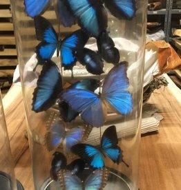 Damn Stolp met echte vlinders ( 10 stuks)