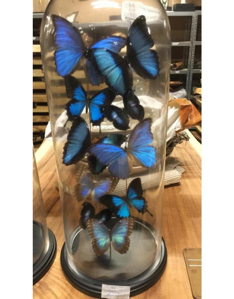 Damn Stolp with butterflies - Copy - Copy - Copy - Copy - Copy