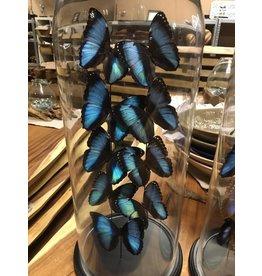 Damn Stolp met echte vlinders ( 9 stuks)   - Copy