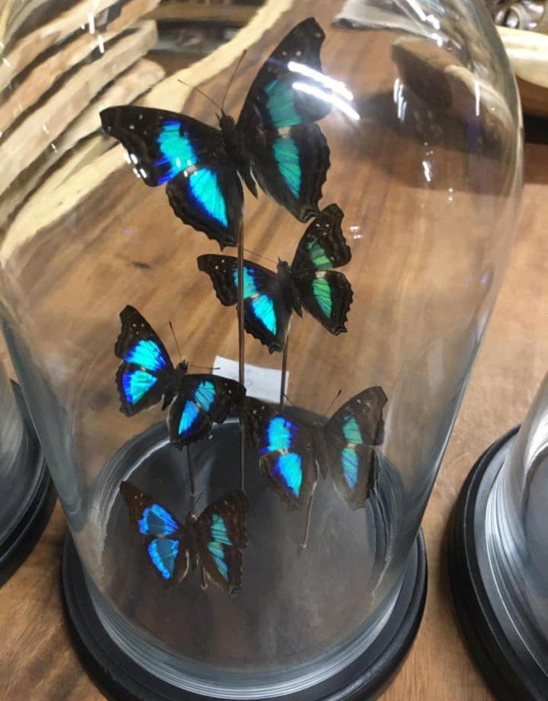 Damn Stolp with butterflies - Copy - Copy - Copy - Copy - Copy - Copy - Copy