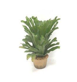 By-Boo Plant hertshoorn