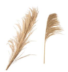 Damn Fluffy grass dried 140 cm ( 1 stuk)
